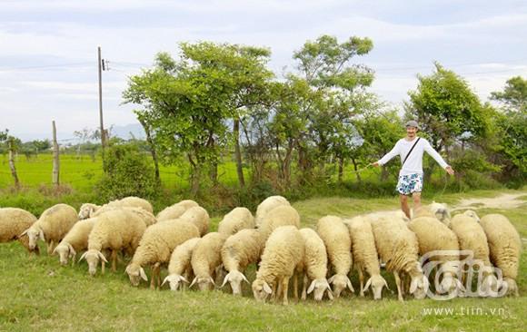 câu chuyện lãnh đạo từ việc chăn cừu