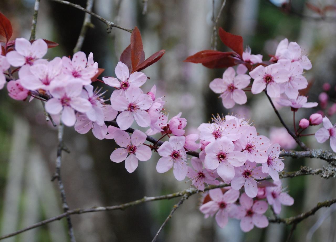 Cách chụp tấm ảnh hoa xuân đẹp nhất
